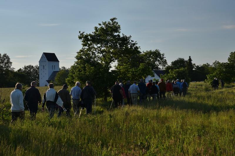Billeder fra vandretur i Rind Plantage, 13. juni 2019